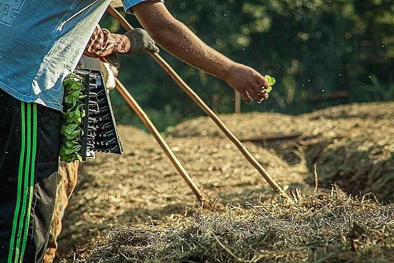 Veto de auxílio a agricultura familiar